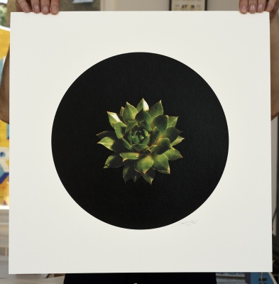 ''Succulent'' limited edition screenprint by Ricky Byrne