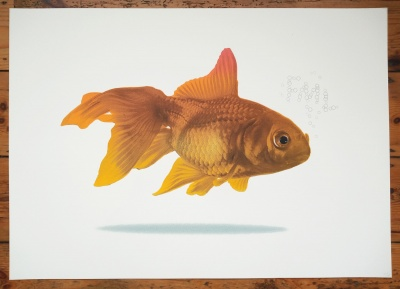 ''Goldfish fml'' limited edition screenprint by Richard Pendry