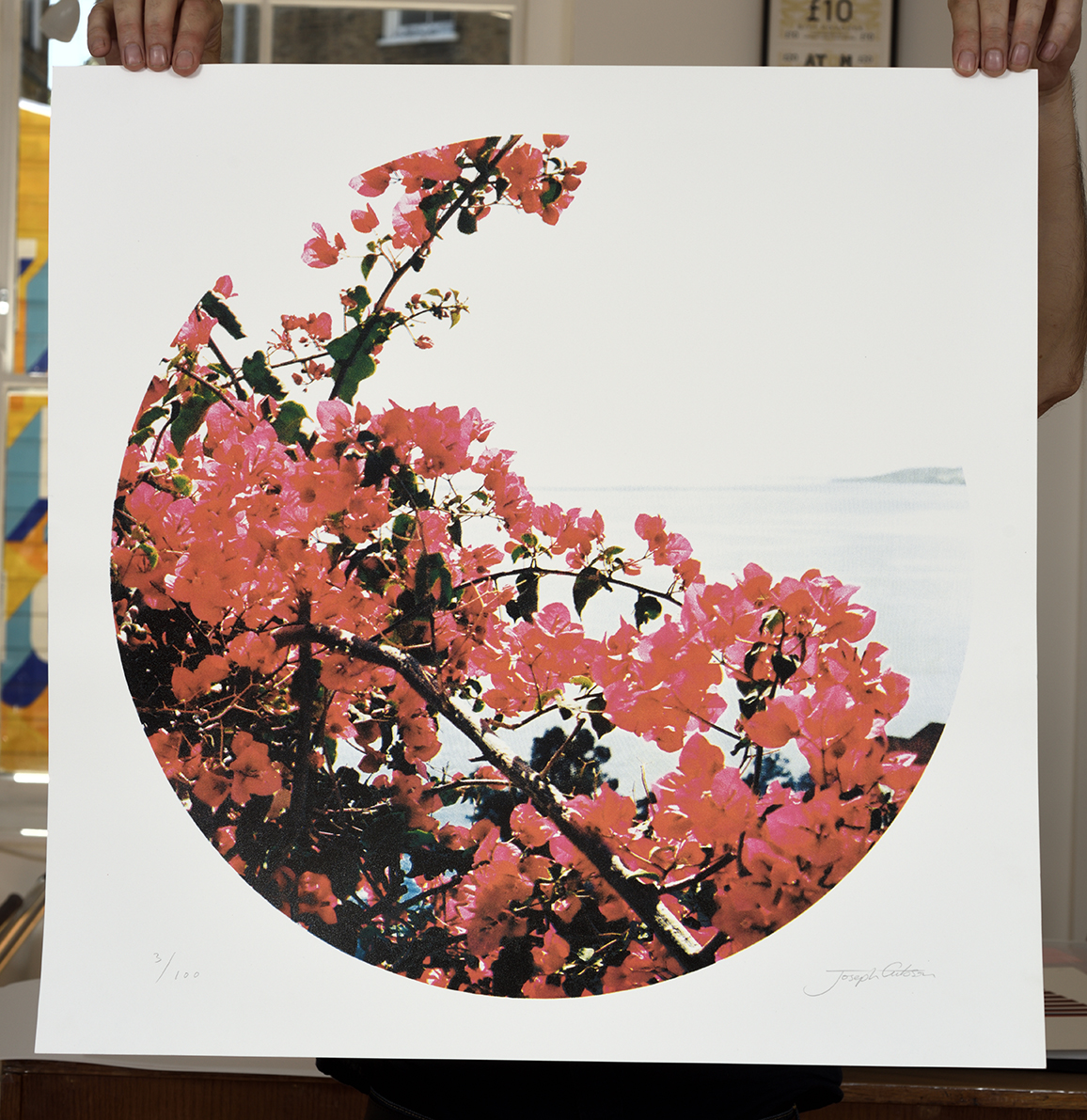 ''Bougainvillea'' limited edition screenprint by Joseph Gibson